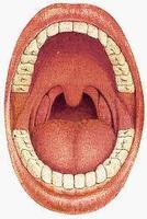 - dutina ústní