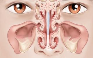 - nos, nosní dutiny